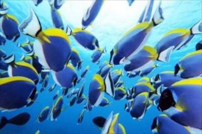 """世界の海中景観の""""彩""""(いろ)をテーマにした海中写真展を開催。海の生き物たちの神秘的な作品が展示される"""