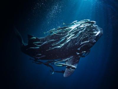 世界各国で撮影された作品はまるで海の中に迷い込んでしまったかのような世界観を持つ