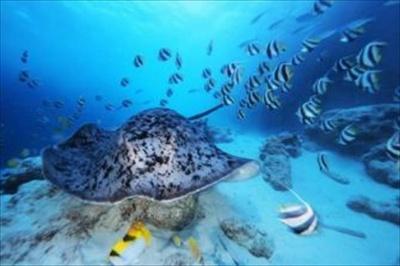 カラフルな海中世界を存分に堪能できる展示会となっている