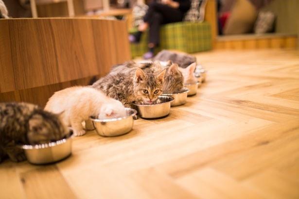 猫のホルモンの病気「甲状腺機能低下症」について …