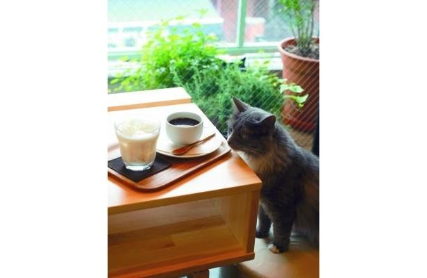 プリンを眺めるフサに胸キュン(mellow cafe)【そのほか猫画像はコチラ】
