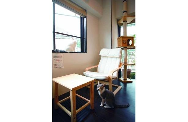 窓を眺めるメグとカメラ目線のハッチ。猫たちと、のんびりした時間を過ごして(mellow cafe)