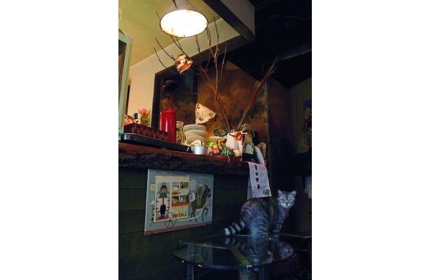 ほっこりする店内には、親子3匹がのんびり(マンヂウカフェ mugimaru2)
