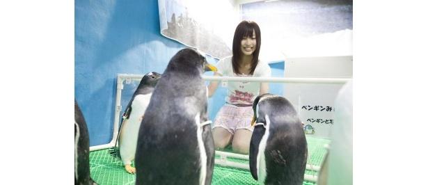 バックヤードでペンギンたちに急接近