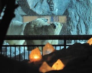 旭山動物園・雪あかりの動物園。アイスキャンドル越しのホッキョクグマ