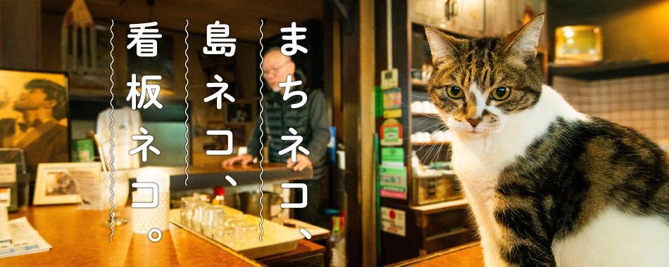 まちネコ、島ネコ、看板ネコ。