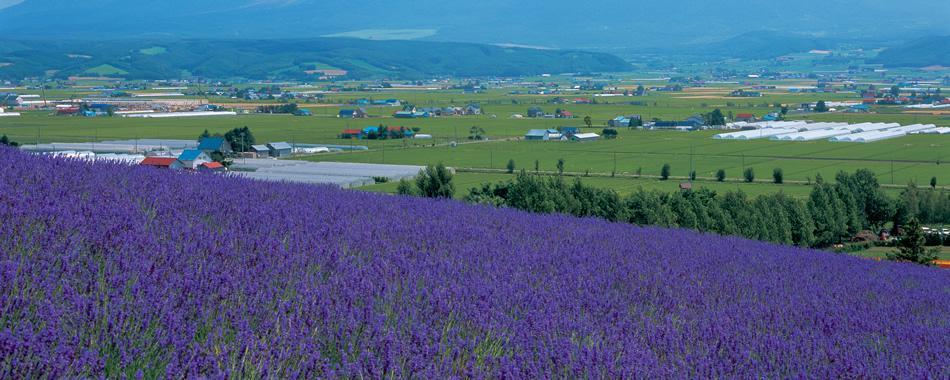 花とガーデンを巡る北海道の旅