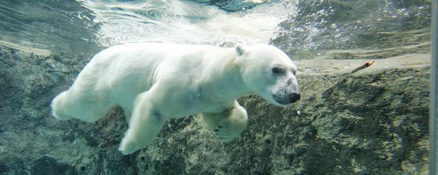 旭山動物園 人気の秘密全部見せます!