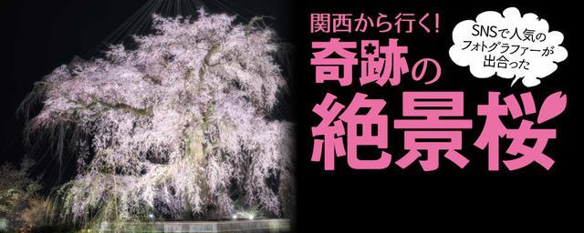 関西から行く! 奇跡の絶景桜