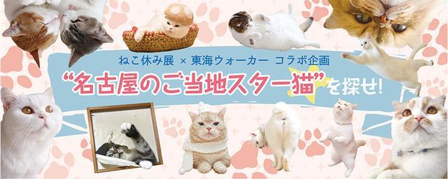 名古屋のご当地スター猫を探せ!