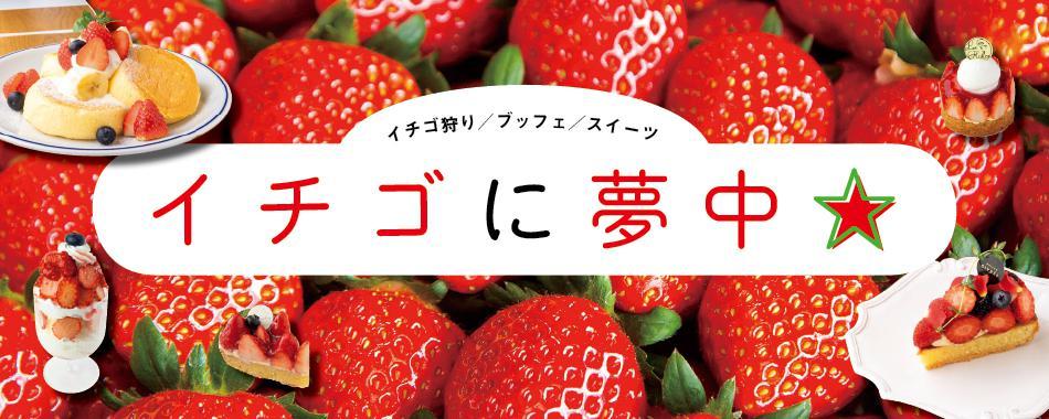 イチゴに夢中
